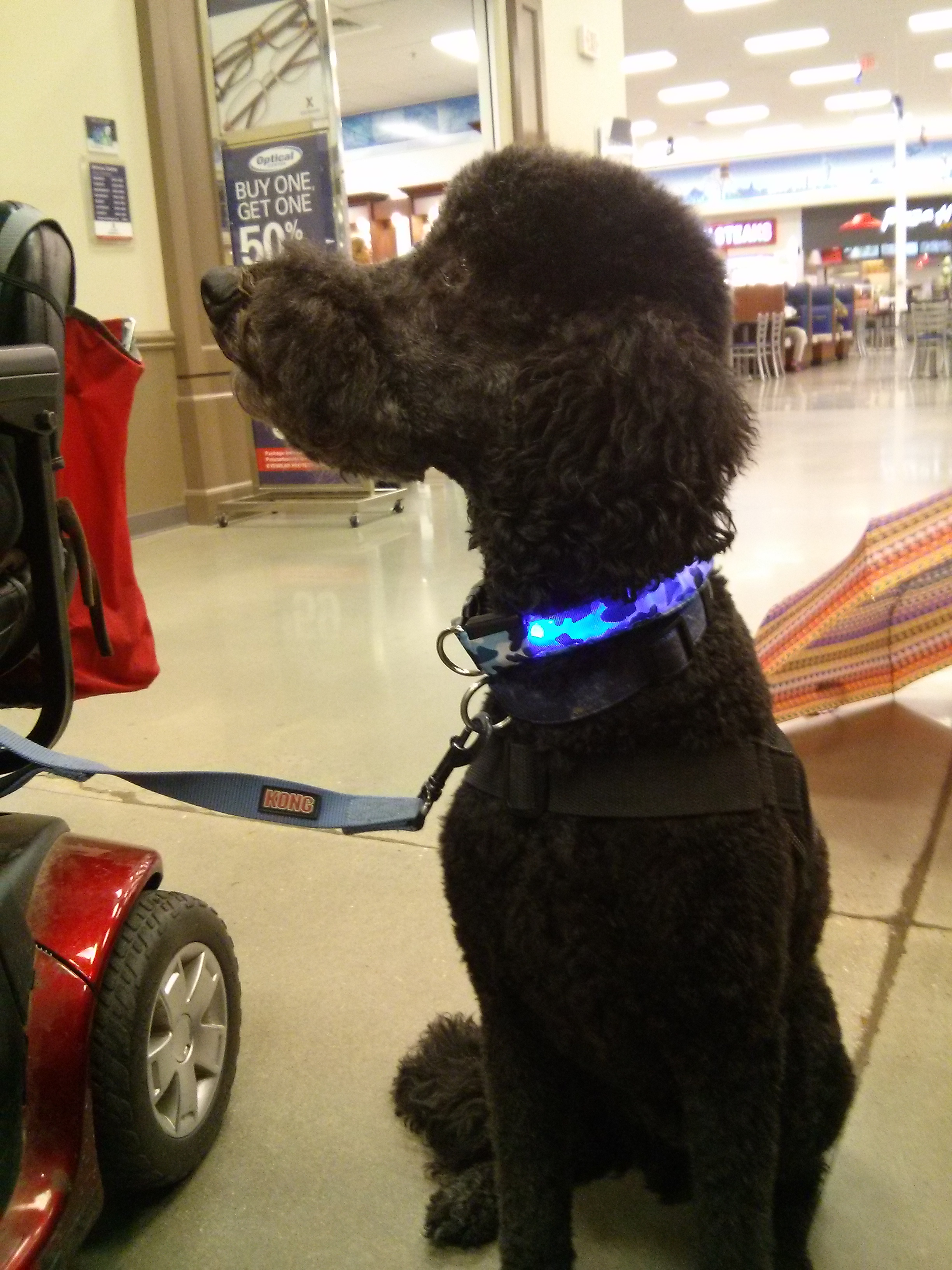 LED Dog Collar Distributed by Nikus, Fort Belvoir Army Base
